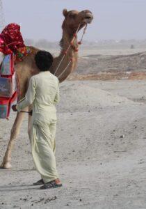Camel Caravan (5)